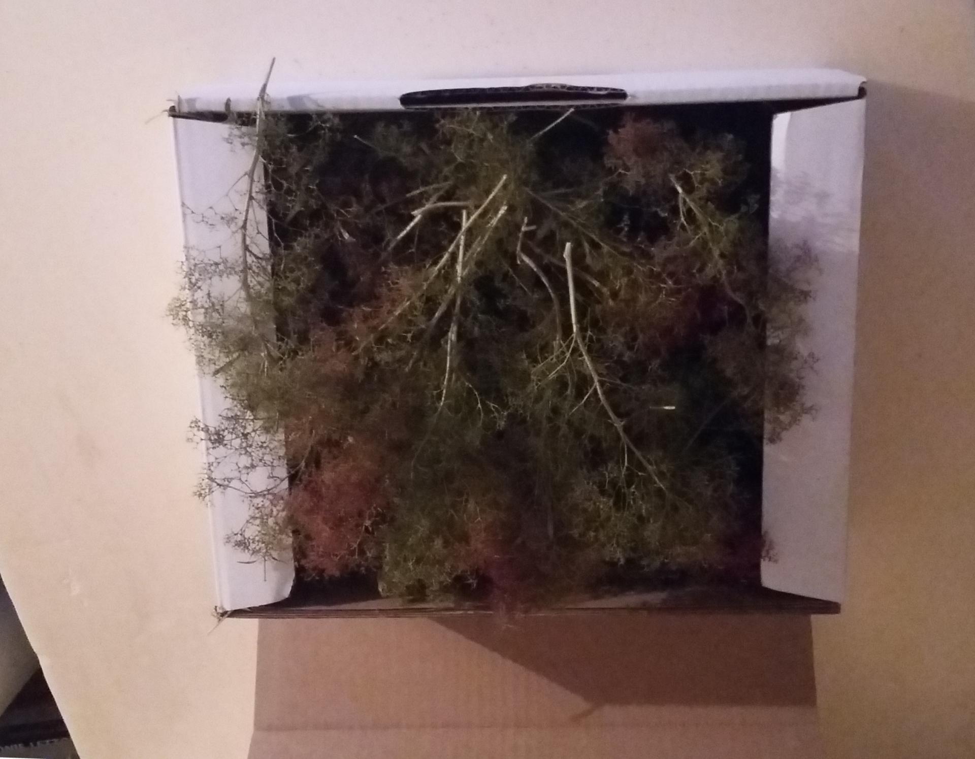 Zeechium contenu du carton