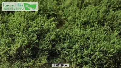 0729xx Buissons haut vert moyen